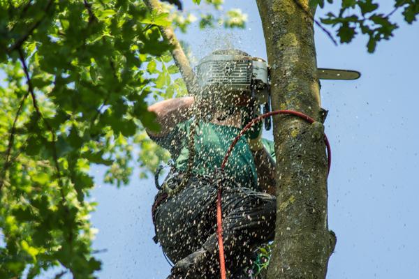 Bremer Baumdienst Baumfällungen bei der Arbeit