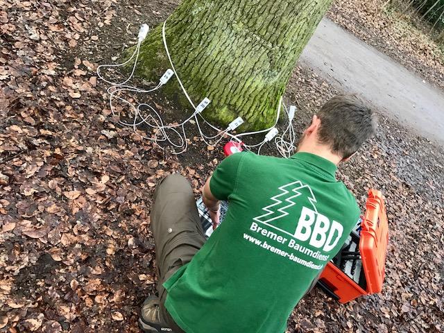 Die Baumkontrolle zum Baummanagement