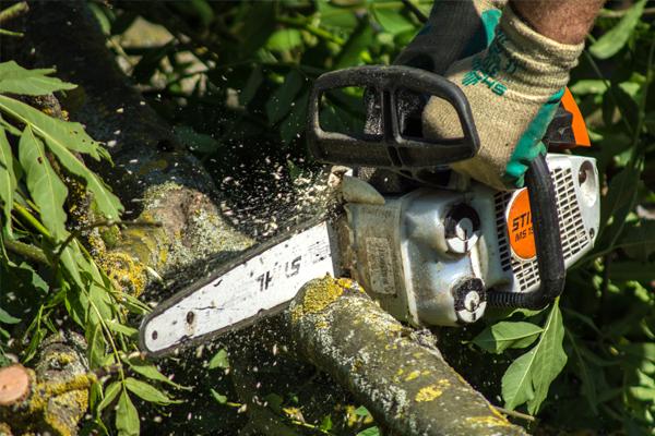 Baumpflege mit der Motorsäge