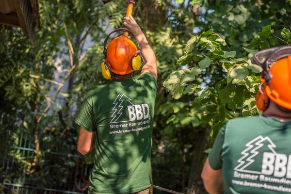 Das Bremer Baumdienst Baumpflege-Team bei der Arbeit