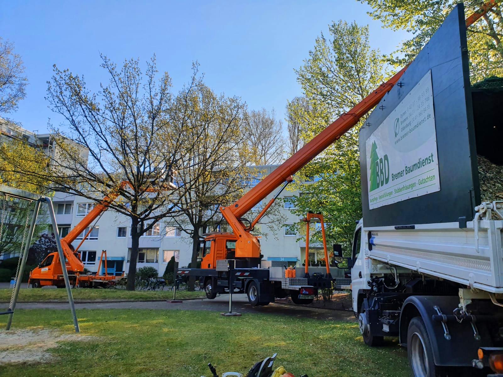 Bremer Baumdienst teamarbeit